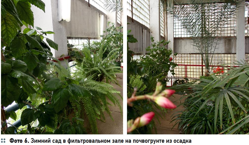 Зимний сад в фильтровальном зале на почвогрунте из осадка