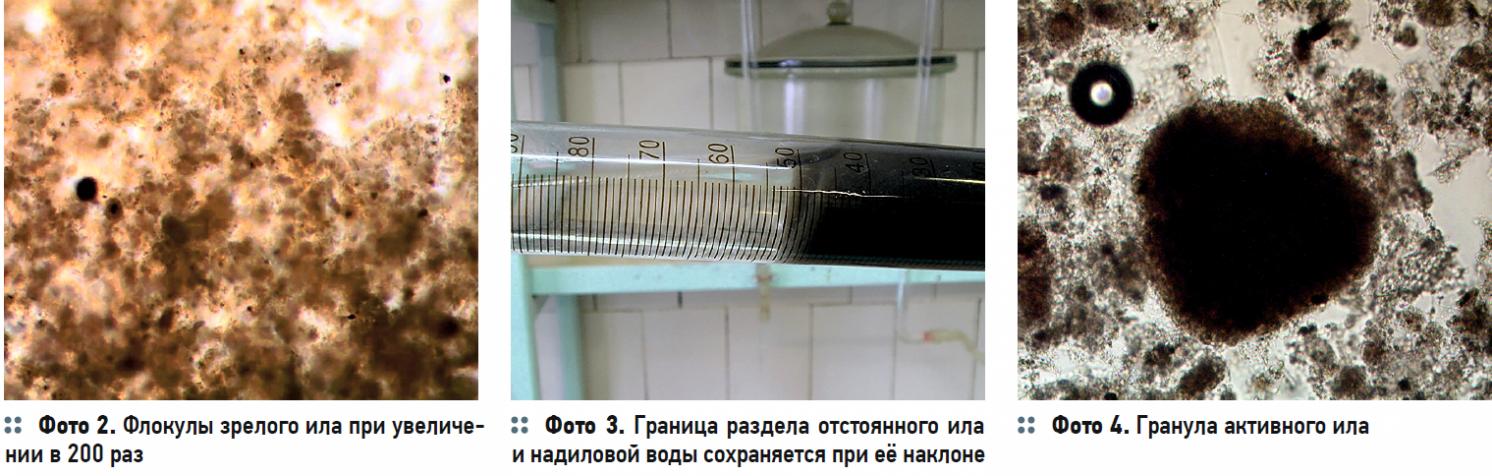 Гидробиологические аспекты процесса биологической очистки с нитрификацией и симультанной денитрификацией (БНЧСД). 2/2020. Фото 2