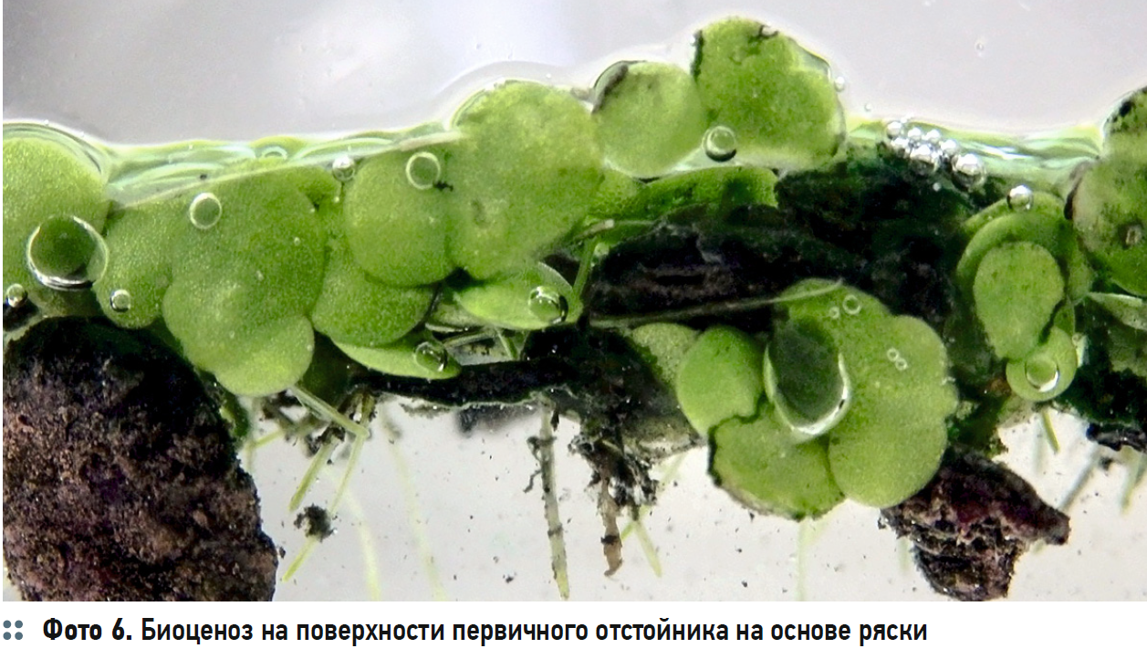 Гидробиологические аспекты процесса биологической очистки с нитрификацией и симультанной денитрификацией (БНЧСД). 2/2020. Фото 5