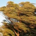 Высокоэффективная полиэнергетическая ветроустановка