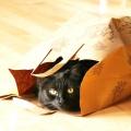 Приобретение унитаза сегодня — покупка «кота в мешке»