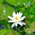 Влияние фитопланктона на формирование качества воды и методы его удаления. Часть 1