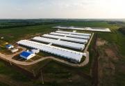 Промышленные котлы Bosch и Buderus поставлены на предприятия группы компаний «АГРОЭКО» Фото №1