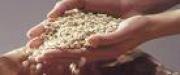 На Кубани осенью планируется ввести в эксплуатацию завод по производству пеллет стоимостью около 600 млн рублей.