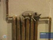 В Самаре установят памятник... батарее отопления