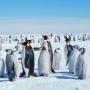 Почему льды на западе Антарктики тают так быстро?