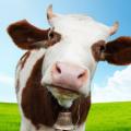 'Умный дом' для коров от Панасоник